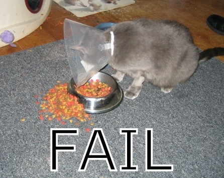cat eating fail